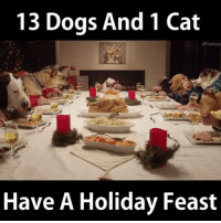 Annnnnnnd....we think this post just WON the internet: 13 Dogs And 1 Cat  Freshpet  Have A Holiday Feast Annnnnnnd....we think this post just WON the internet
