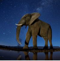 Memes, Amsterdam, and 🤖: 13 FEB: This image of an African elephant pictured under a starry sky is just one the photos recognised in the 2017 World Press Photo Awards. The shot, taken by Bence Mate won third prize in the Nature (Stories) category. The World Press Photo awards have been running since 1955. This year, the jury awarded prizes in eight categories to 45 photographers from 25 countries. An image of the assassination of Russia's ambassador to Turkey, Andrei Karlov, won the overall first prize. Taken on 19 December 2016 at an art gallery in Ankara by Associated Press photographer Burhan Ozbilici, it shows gun-wielding off-duty Turkish policeman Mevlut Mert Altintas shouting, after fatally shooting the ambassador. The winners and finalists will feature in a touring exhibition which opens in Amsterdam on 20 April 2017. You can view the full set of prize-winning images at www.worldpressphoto.org. PHOTO: Bence Mate-Courtesy of World Press Photo Foundation BBCSnapshot photography WorldPressPhoto @worldpressphoto WPPh2017 competition prize award Nature