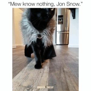 "Instagram, Memes, and True: 13  ""Mew know nothing, Jon Snow.""  @ROVER THECAT The true hair to the throne 🐈 I mean, heir to the throne.  - 🎥: @rover_thecat, Instagram"