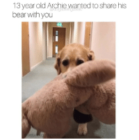 Memes, Bear, and Old: 13 year old Archie wanted to share his  bear with you  ds  archie egoldenoldie Please enjoy his large teddy bear. Pup @archiethegoldenoldie