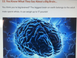 BIGG BRAIN: 13. You Know What They Say About a Big Brain...  You think you're big-brained? The biggest brain on earth belongs to the adult  male sperm whale. It can weigh up to 17 pounds! BIGG BRAIN