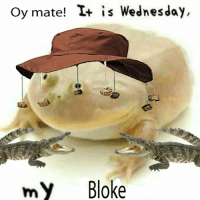 My Dudes: Oy mate! T+ is Wednesday  my Bloke