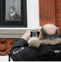 """14 NOV: Outside the Ecuadorian Embassy, London, a man photographs a cat that is believed to belong to Julian Assange. The cat, which has a twitter feed with the handle @EmbassyCat, claims to be """"Interested in counter-purrveillance"""" and has been photographed alongside filmmaker Michael Moore. Assange, founder of WikiLeaks, has been living in the embassy for over four years after seeking asylum there in his bid to avoid extradition to Sweden on a rape allegation, which he denies. However, today Ingrid Isgren, Sweden's deputy chief prosecutor, arrived at the embassy with Swedish police to interview Assange. PHOTO: Yui Mok-PA Wire BBCSnapshot photojournalism photography cat Assange: 14 NOV: Outside the Ecuadorian Embassy, London, a man photographs a cat that is believed to belong to Julian Assange. The cat, which has a twitter feed with the handle @EmbassyCat, claims to be """"Interested in counter-purrveillance"""" and has been photographed alongside filmmaker Michael Moore. Assange, founder of WikiLeaks, has been living in the embassy for over four years after seeking asylum there in his bid to avoid extradition to Sweden on a rape allegation, which he denies. However, today Ingrid Isgren, Sweden's deputy chief prosecutor, arrived at the embassy with Swedish police to interview Assange. PHOTO: Yui Mok-PA Wire BBCSnapshot photojournalism photography cat Assange"""