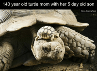 Facts, Memes, and Amaz: 140 year old turtle mom with her 5 day old son  Some Amazing Facts