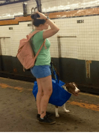 Dogs, Subway, and Fit: 145  I45  145 They banned dogs on the subway unless they can fit on a bag