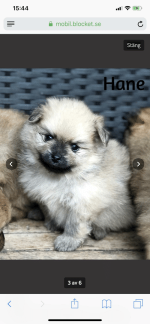 Cute, Love, and Puppy: 15:44  mobil.blocket.se  Stäng  Hane  3 av 6 Adopting this cute puppy on August the 6th! I'm so glad that I will have a companion to love and take care of!