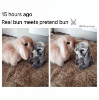 "Memes, 🤖, and The Grey: 15 hours ago  Real bun meets pretend burn  @DrSmashlove See this is the problem. Average person sees this pic and thinks: ""wow, adorable, real bunny meets stuffed bunny, goals 💕😍."" Not me. I imagine the real bunny being named Jose. And Jose sees a grey rabbit and thinks that rabbit is trying to take over his block. So he rolls up on the grey rabbit like ""Aye pendejo - what set u claim, essay. Is u gang or not, essay. Essay? Jew theenk u can juss come around and hang out on my corner and be all quiet, buttercup? Leesten essay, I ain't afraid of jail, puto. I been to jail...jail excites me. Jew think I'm afraid of jail essay lemme show u how I do u in the shower, buttercup...lemme introduce u to my LEETO FREN..."" RabbitConvos ImAnIdiot IgnoreMe Halp 😂😂😂"