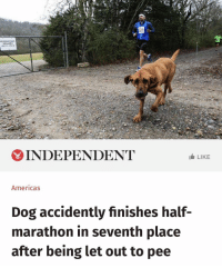 Cool story.: 151  RESERVATIONS  REQUIRED  DEC 1S-FE8 2  INDEPENDENT  LIKE  Americas  Dog accidently finishes half-  marathon in seventh place  after being let out to pee Cool story.