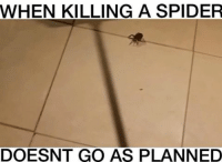 Kinda normie as heck but accurateWHEN KILLING A SPIDER DOESN'T GO AS PLANNED  Credit: QPark: WHEN KILLING A SPIDER  DOESNT GO AS PLANNED Kinda normie as heck but accurateWHEN KILLING A SPIDER DOESN'T GO AS PLANNED  Credit: QPark