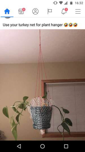 The salmonella flowers are in bloom: 16:32  Use your turkey net for plant hanger The salmonella flowers are in bloom