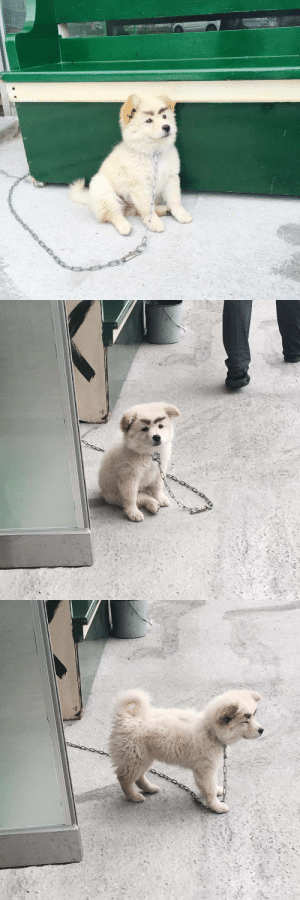 Bitch, Gif, and Target: 16-bitch:  dogsenpai:  holy sht this mad puppy
