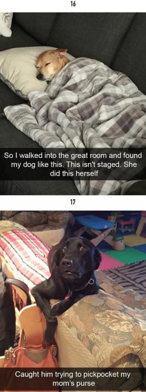 50+ Of The Happiest Dog Memes That Will Keep You Laughing For Hours #dogmemes - Lovely Animals World: 16  So I walked into the great room and found  my dog like this. This isn't staged. She  did this herself  17  Caught him trying to pickpocket my  mom's purse 50+ Of The Happiest Dog Memes That Will Keep You Laughing For Hours #dogmemes - Lovely Animals World