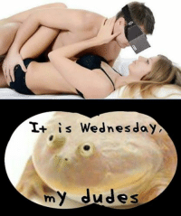 My Dudes: It is Wednesday  my dudes