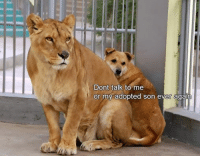 Don't Talk to Me: Dont talk to me  or my adopted son ever again