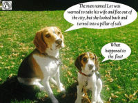 Shared from The Beagle Wrangler: The man named Lot was  warned to take his wife and flee out of  the city, but she looked back and  turned into a pillar of salt.  What  happened to  the flea? Shared from The Beagle Wrangler