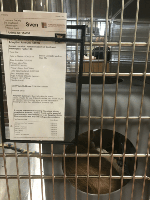 Sven has joined the real world, as a cat: /18/2019  Kennel Card  Humane Society  of Southwest  Washington  Kennel Card  Sven  Humane Society  FOR SOUTHWEST WASHINGTON  Animal ID: 114039  9120  Slatus. Fvanab  Adoption Amount: $50.00  Current Location: Humane Society of Southwest  Washington-Cattery #8  Type: Cat  Breed: Domestic Medium  Hair Mix  Date In Shelter: 6/26/2019  Date Available: 7/2/2019  Primary MicroChip:  985113002361663  Primary Color: Red Tabby  Date Spay/Neutered: 7/16/2019  Sex: Neutered Male  Age: 6 Years 3 Weeks (approx)  Weight: 10.71875 lbs  Media Animal:  Lost/Found Address: 5100 block of N st.  Source: Stray  Adoption Summary: Sven is looking for a new  bestie...maybe it's you! If Sven looks like your dream cat, let  an adoption team member know you are interested in  meeting him and they will set you up with a visit.  If you are interested in adopting this animal please  provide the Animal ID number found on the upper left  hand corner of this Kennel Card to an Adoption Center  Representative and they will be happy to assist you.  Vet Treatment Type  Date Given  Subcutaneous Fluid Treatment  6/26/2019  Nail Trim  6/26/2019  Woods Lamp Exam  6/26/2019  Strongid Dewormer  Ear Cleaning  6/26/2019  6/26/2019  FVRCP  6/26/2019  6/26/2019  Activyl Flea Treatment  https://southwesthumane.shelterbuddy.com/customise/forms/kennelCard.asp?animalid 114039 Sven has joined the real world, as a cat