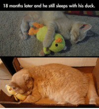 Ducks: 18 months later and he still sleeps with his duck.