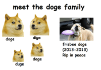 say hello to the doge family: meet the doge family  dige  doge  frisbee doge  (2013-2013)  Rip in peace  3 dage  duge say hello to the doge family
