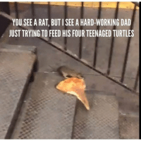 YOU SEE A RAT, BUTI SEE A HARD-WORKING DAD  JUST TRYING TO FEED HIS FOUR TEENAGED TURTLES LOL go check out this page♢₢ⓤ₫Ǝ♢