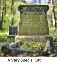 "Cats, Http, and Pain: 1898-1910  HE WAS ONLY A CAT  BUT HE WAS HUMA)N  ENOUGH TO BEA CREAT  ONELINESS AND PAIN  FORT IN  HOURS O  A Very Special Cat <p>We really don't deserve cats via /r/wholesomememes <a href=""http://ift.tt/2FfAseY"">http://ift.tt/2FfAseY</a></p>"