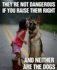 THEY'RE NOT DANGEROUS  IF YOU RAISE THEM RIGHT  AND NEITHER  ARE THE DOGS