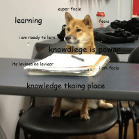 wow, such education time: super focis  learning  focis  i am raedy to lern  knowdlege is pot  its leviosa no levisar  i am focis  knowledge tkaing place wow, such education time