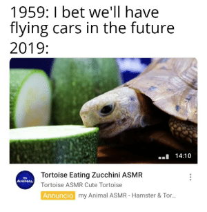 How did we get there: 1959: I bet we'll have  flying cars in the future  2019:  14:10  Tortoise Eating Zucchini ASMR  my  ANIMAL  Tortoise ASMR Cute Tortoise  Annuncio  my Animal ASMR - Hamster & Tor... How did we get there