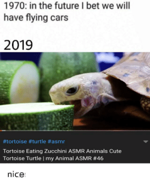 hehe, funny: 1970: in the future I bet we will  have flying cars  2019  #tortoise turtle #asmr  Tortoise Eating Zucchini ASMR Animals Cute  Tortoise Turtle | my Animal ASMR #46  nice hehe, funny