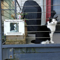 Cats, Fae, and Funny: HAVE YOU SEEN THIS CAT?  BECAUSE HE IS Fae%ING AWESOME!