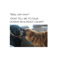 """Baby, It's Cold Outside, Dogs, and Browns: """"Baby, calm down""""  DONT TELL ME TO CALM  DOWN!!!! IM ALREADY CALM!!!!"""" i'm the brown dog"""