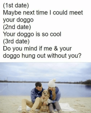 Animals, Funny, and Memes: (1st date)  Maybe next time I could meet  your doggo  (2nd date)  Your doggo is so cool  (3rd date)  Do you mind if me & your  doggo hung out without you? 42 Funny Dog Memes That'll Make Your Day! - Lovely Animals World