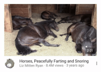 """Go to Sleep, Horses, and Tumblr: 2:01  Horses, Peacefully Farting and Snoring  Liz Mitten Ryan 8.4M views 3 years ago <p><a href=""""http://taquito.tumblr.com/post/164963289775"""" class=""""tumblr_blog"""">taquito</a>:</p><blockquote><p>video i play to go to sleep to so that i have good dreams</p></blockquote>"""