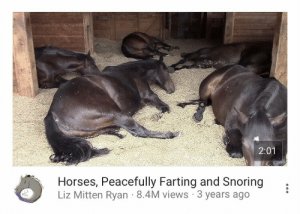 Go to Sleep, Horses, and Tumblr: 2:01  Horses, Peacefully Farting and Snoring,  Liz Mitten Ryan 8.4M views 3 years ago taquito:video i play to go to sleep to so that i have good dreams