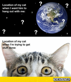 lolzandtrollz:  The Location Of My Cat: 2  2  Location of my cat  when I want him to  hang out with me:  2  2  2  Location of my cat  when I'm trying to get  stuff done:  THE META PICTURE lolzandtrollz:  The Location Of My Cat