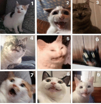 Cat, You, and Are You: 2  3  4  5  6  7  8  9 which cat are you