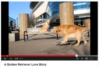 Love, Target, and Tumblr: 2:31/3:12  A Golden Retriever Love Story dog-sister:  he was a skater dog, she said see u later dog