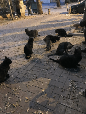 Cats, All The, and Fit: 2 days ago I captured this photo at my neighbourhood, a man was feeding all the cats in the area,there were more cats that couldn't fit my photoshoot.They all know the man and gathered around him when they see him. <33