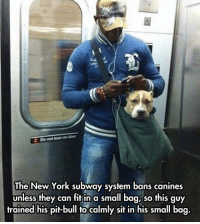 """Lean, Meme, and New York: 2 Do not lean on door  The New York subway system bans canines  unless they can fit in a small bag, so this guy  trained his pit-bull to calmly sit in his small bag. <p>This Man Is Doing It Very Right.<br/><a href=""""http://daily-meme.tumblr.com""""><span style=""""color: #0000cd;""""><a href=""""http://daily-meme.tumblr.com/"""">http://daily-meme.tumblr.com/</a></span></a></p>"""
