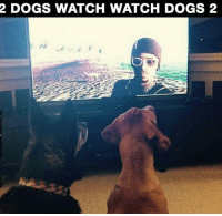 Dogs, Watch, and Watch Dogs: 2 DOGS WATCH WATCH DOGS 2 2 dogs watch watch dogs 2 https://t.co/ZDUbthG3Tn