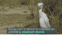 """Group Chat, Tumblr, and Blog: 2  Dung cam is about to capture an  unfolding elephant drama <p><a href=""""http://standard-dingo.tumblr.com/post/160962067853/when-theres-discourse-in-the-group-chat-and-you"""" class=""""tumblr_blog"""">standard-dingo</a>:</p> <blockquote><p>When there's discourse in the group chat and you just wanna watch without getting involved</p></blockquote>"""