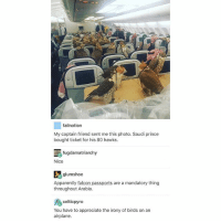 Birds on a plane... the irony... Follow me ( @god.of.appleysauce )for more funny tumblr and textpost: 2  failnation  My captain friend sent me this photo. Saudi prince  bought ticket for his 80 hawks.  島fugdamatriarchy  Nice  glumshoe  throughout Arabia.  celticpyro  Apparently falcon passports are a mandatory thing  You have to appreciate the irony of birds on an  airplane. Birds on a plane... the irony... Follow me ( @god.of.appleysauce )for more funny tumblr and textpost