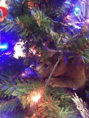 Hunting, Best, and Tree: 2 Hunting ornaments while I decorate the tree. Best helper