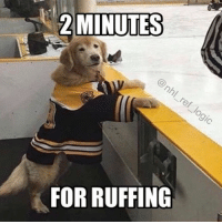 Memes, Boston Bruins, and 🤖: 2 MINUTES  FOR RUFFING What are the chances this dog can play better defense than the Bruins So cute 🐶 nhl hockey bostonbruins boston bruins dogs dog