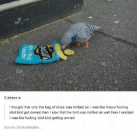 Fucking, Memes, and Saw: 2-shane-s  I thought that only the bag of chips was knitted so I was like Imaoo fucking  idiot bird got owned then I saw that the bird was knitted as well then I realized  I was the fucking idiot bird getting owned  Source: birdsofafeathe