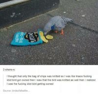 bag of chips: 2-shane-s  I thought that only the bag of chips was knitted so I was like lmaoo fucking  idiot bird got owned then l saw that the bird was knitted as well then I realized  I was the fucking idiot bird getting owned  Source: birdsofafeathe...