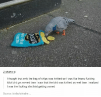 me🐦irl: 2-shane-s  I thought that only the bag of chips was knitted so I was like lmaoo fucking  idiot bird got owned then l saw that the bird was knitted as well then I realized  I was the fucking idiot bird getting owned  Source: birdsofafeathe... me🐦irl
