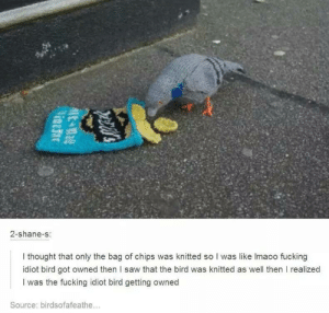idiot bird got owned: 2-shane-s  I thought that only the bag of chips was knitted so I was like lmaoo fucking  idiot bird got owned then l saw that the bird was knitted as well then I realized  I was the fucking idiot bird getting owned  Source: birdsofafeathe... idiot bird got owned