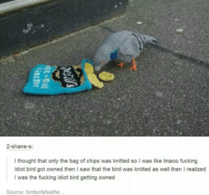 Plot twist for the ages by EK720 MORE MEMES: 2-shane-s:  I thought that only the bag of chips was knitted so I was like Imaoo fucking  idiot bird got owned then I saw that the bird was knitted as well then I realized  I was the fucking idiot bird getting owned  Source: birdsofafeathe... Plot twist for the ages by EK720 MORE MEMES
