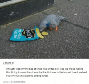 Fucking, Saw, and Idiot: 2-shane-s  I thought that only the bag of chips was knitted so I was like lmaoo fucking  idiot bird got owned then l saw that the bird was knitted as well then I realized  I was the fucking idiot bird getting owned  Source: birdsofafeathe... idiot birb (x-post r/me_irl)
