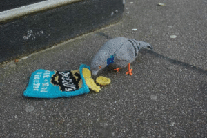 2-shane-s: I thought that only the bag of chips was knitted so I was like lmaoo fucking idiot bird got owned then I saw that the bird was knitted as well then I realized I was the fucking idiot bird getting owned : 2-shane-s: I thought that only the bag of chips was knitted so I was like lmaoo fucking idiot bird got owned then I saw that the bird was knitted as well then I realized I was the fucking idiot bird getting owned